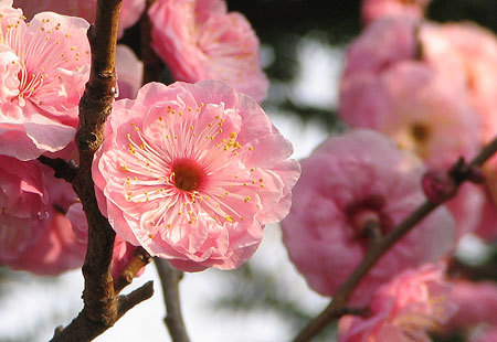 0307-Blossom1-450
