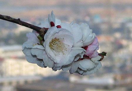 0307-Blossom2-450