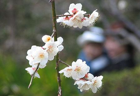 0307-Blossom3-450