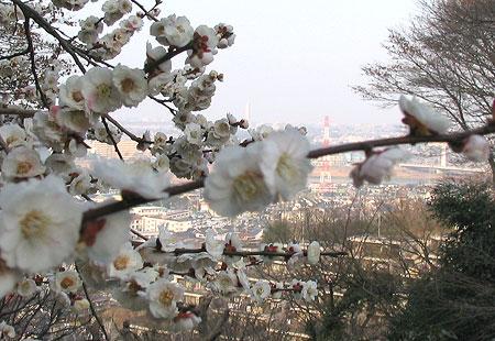 0307-Blossom4-450