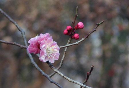 0307-Blossom5-450
