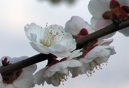 0307-Blossom6-450