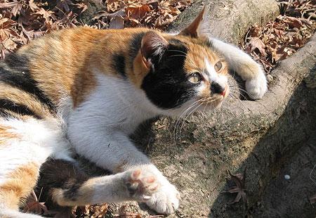 0307-Cat-450