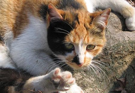 0307-Cat2-450-3