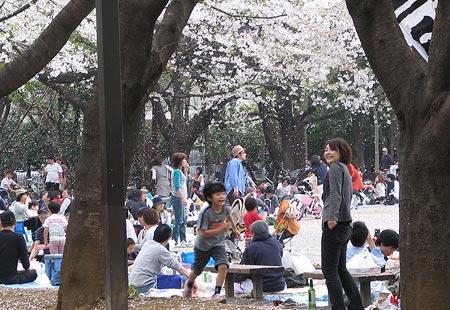 0307-Sakurafall-450