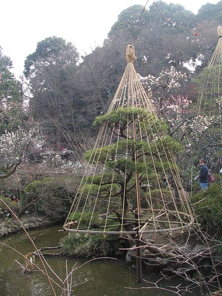 0307-Treecone-450