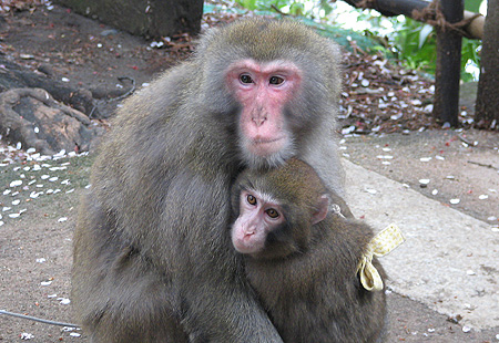 0406-Monkeys-450