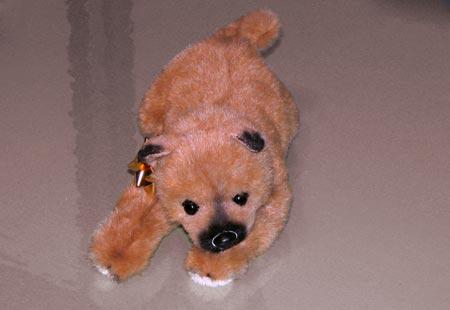0808-Puppy6-450