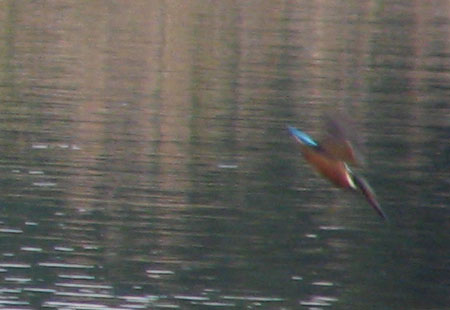 11-03-2006-Kingfisher2
