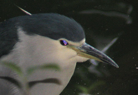 1106-Bcn Heron1-450