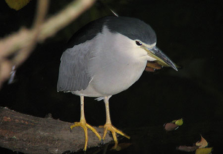 1106-Bcn Heron2-450