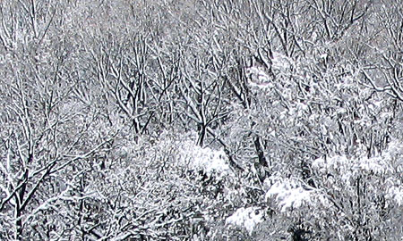 305-Snowtrees