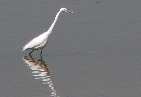 405-Greategret2-450